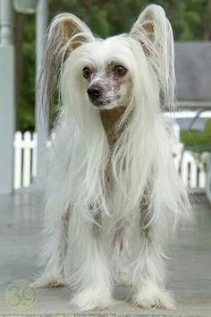Demi....a hairy hairless