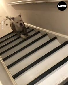 Simple quarantine Excercise😅 ©Woof WoofBest Picture For cute dogs aesthetic For Your TasteYou are looking f Cute Funny Dogs, Funny Dog Memes, Funny Dog Videos, Funny Animal Memes, Cute Funny Animals, Funny Animal Pictures, Cute Dogs And Puppies, Doggies, Cute Animal Videos