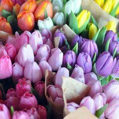 Magic of colours....dat makes da tulip so special