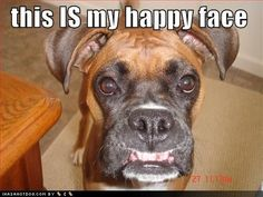 happy Boxer face #boxerdogshumor