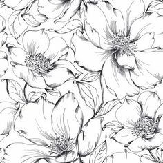 Lilies Drawing, Floral Drawing, Graphite Drawings, Doodle Drawings, Flower Line Drawings, Drawing Flowers, Pattern Sketch, Black And White Flowers, Flower Coloring Pages