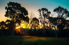 Last Light by Andrew Shepherd @ 500px.  Sunset over my back fence in Prospect, Tasmania. Smoke from bushfires at Pipers River, 45km away.    Nikon D5000  Lightroom 4