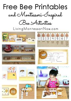 Long list of free bee printables along with ideas for using bee printables to create Montessori-inspired activities for preschoolers through grade 1!