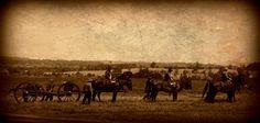 Horse Drawn Artillery 150th 2nd Manassas Civil War Photos, Photography Contests, Horse Drawn, American Civil War, Photo Contest, Cannon, Horses, Painting, Art