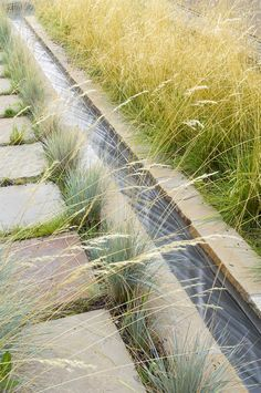 Sandstone water channel w/ blue fescue and tufted hair grass, transitions to a wetland