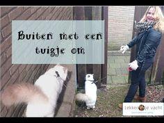 Kat met tuigje - leren om met je kat buiten aan een lijntje te lopen