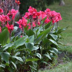 canna lilly - http://pinterest.com/sweetviolet79/easy-informal-floral-arrangements/