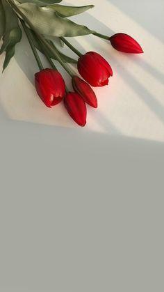 아이폰 감성 배경화면 봄 심플 : 네이버 블로그 Iphone Wallpaper Photos, Aesthetic Iphone Wallpaper, Aesthetic Wallpapers, Beautiful Flower Arrangements, Beautiful Flowers, Flowery Wallpaper, Aesthetic Photography Nature, Harry Styles Wallpaper, Red Tulips