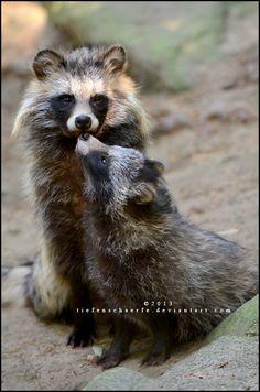 Hello, Mummy by *Tiefenschaerfe (Raccoon dogs)