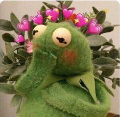 Frog Wallpaper, Aesthetic Iphone Wallpaper, Disney Wallpaper, Cartoon Wallpaper, Cute Cat Memes, Cute Love Memes, Cartoon Memes, Cute Cartoon, Sapo Kermit