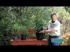 Monrovia.com ~ several helpful gardening videos, like this one: How to Choose Healthy Plants