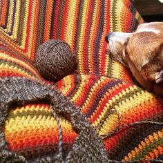 Closing out the night under my newly finished blanket with Bosley and knitting a cowl with some of my handspun. Also Bob's Burgers and fish & chips.  #yarn #knit #knitting #crochet #crochetblanket #crochetafghan #handknit #handmade #handspun #handspunyarn #spinnersofinstagram #knittersofinstagram #corgi #corgisofinstagram #pembrokewelshcorgi #dog #dogsofinstagram by peraltadyeworks