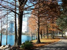 Watch the sunrise and have a picnic while strolling around Lake Eola, then head to the park to swing on the swings. Disney Travel, Disney Trips, Lake Eola, Downtown Orlando, Park City, Swings, Palm Trees, Places Ive Been, Sunrise