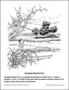 Florida Printables: Everglades National Park Coloring Page