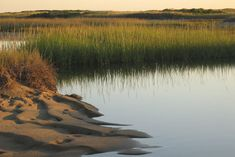 Salt Marsh Plants Key to Reducing Coastal Erosion and Flooding ...