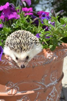 i do prefer hedgehogs ,i do know with whom i'm dealing with...