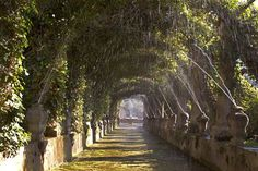 Gallery | Jardines de Alfabia | Lugares con encanto en Mallorca
