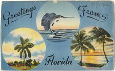 Florida Views: Greetings From Century Florida Visit Florida, Old Florida, Vintage Florida, Florida Vacation, Travel Icon, Travel Style, Vintage Maps, Vintage Postcards, Travel Journal Pages