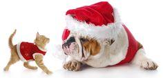 Wir wünschen allen Freunden, Geschäftspartnern und Kunden ein frohes Weihnachtsfest.   http://petsworld-and-more.de/