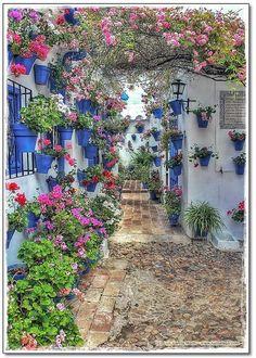 Cordoba, Andalucia, Espana// bluebell pots