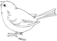 modelo para o pássaro