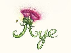 'Aye' is print number 1 in a quirky collection by the artist Cat Lawson. The Thistle Kingdom Collection brings Scottish words to life in the form of unique and characterful thistles. This charming print is a reproduction taken from an original hand cra. Scottish Words, Scottish Quotes, Scottish Thistle Tattoo, Scottish Independence, Glasgow School Of Art, Etsy, Thistles, Artist, Artwork