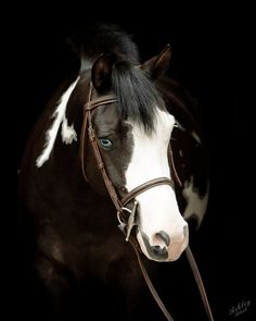 Yup, definitely love photos of horses like this. and what a freaking cute pony, to boot.