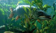 Картинки по запросу рыбалка 3д