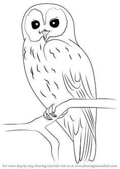 Pencil Drawing Techniques Learn How to Draw a Tawny Owl (Owls) Step by Step : Drawing Tutorials Bird Drawings, Art Drawings Sketches, Easy Drawings, Pencil Drawings, Easy Sketches To Draw, Owl Art, Bird Art, Owl Clip Art, Penguin Art