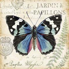 Butterfly Histoire Naturelle II 18x18