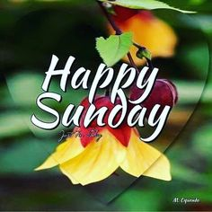 Enjoy your day of rest. Sunday Morning Images, Happy Sunday Pictures, Blessed Sunday Morning, Good Morning Gift, Sunday Morning Coffee, Sunday Wishes, Sunday Greetings, Happy Sunday Quotes, Evening Greetings