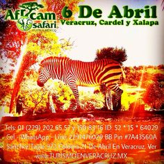 6 de abril salida a #Africam #safri http://www.turismoenveracruz.mx/promociones/ #Veracruz #Xalapa