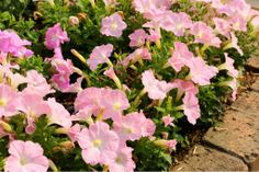 #art #artwork #写真 #photography #アート#myphotos  #photo #花 #植物 #flowers #風景 #landscape