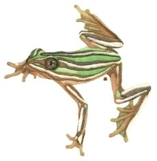 FROG!! Shadow Work Tree Frog Hand Embroidery by Tanja Berlin: Berlin Embroidery Designs