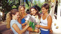 Menschen und Tiere lernt ihr auf eurer Sprachreise nach Brisbane kennen und lieben. :-) https://www.steinfels.de/sprachreisen/erwachsene-englisch-australien-brisbane.html #Brisbane #Australien #Sprachreise #Tiere #Koala