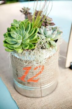 Succulent wedding centerpiece //// photo credit: Rachel Robertson Photography