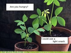 Some light humor...Photosynthesis