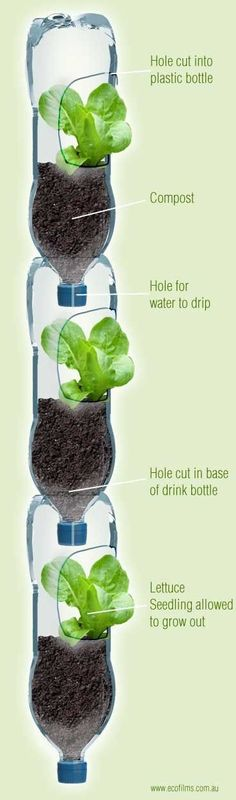 Growing lettuce in a vertical garden. What a great way to recycle old bottles and save space. Keeps the lettuce away from the rabbits, too!