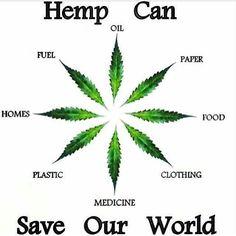 marijuana term paper