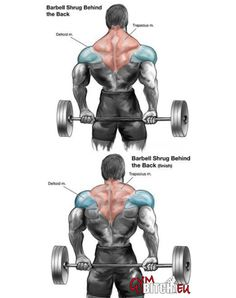 Trapezius Exercises Healthy Fitness Workouts Body Train Trap