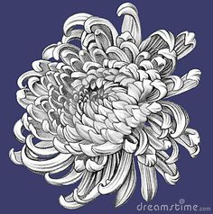 chrysanthemum outline - Google Search More