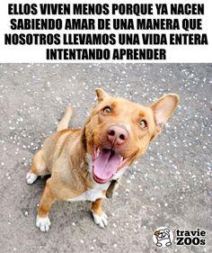 Aprenden más rápido y mejor que nosotros! #perros #dogs #vida #años #lecciones Animals And Pets, Baby Animals, Pet Dogs, Dog Cat, Funny Spanish Memes, Mundo Animal, Cute Funny Animals, Little Dogs, Animal Memes