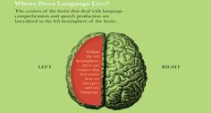 Here's the reason why you should start learning languages before you get older and older.