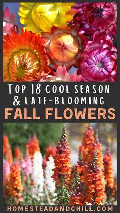 Autumn Garden, Autumn Flowers Garden, Fall Blooming Flowers, Growing Flowers, Planting Flowers, Fall Flower Gardens, Flower Gardening, Gardening Tips, Urban Gardening