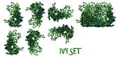 REAL IVY PLANTS PNG by *mysticmorning on deviantART