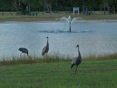 Wickham Park Melbourne FL by MelbourneFLRealEstate, via Flickr