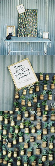 Succulent wall, favors, succulents in pots, miniature favors, let love grow // Jenna McElroy Photography
