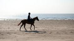 Sunny horse ride along the beach.