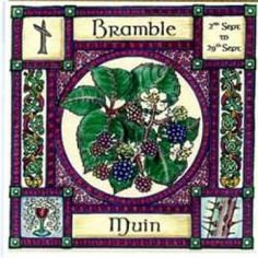 Bramble, Ogham name Muin, rules 2nd September to 29th September and in divination represents intoxication; as Blackberry wine is strong and heady, so the excitement from chancing upon new ideas is also intoxicating.