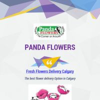Infographic: Panda Fresh Flowers Delivery Calgary